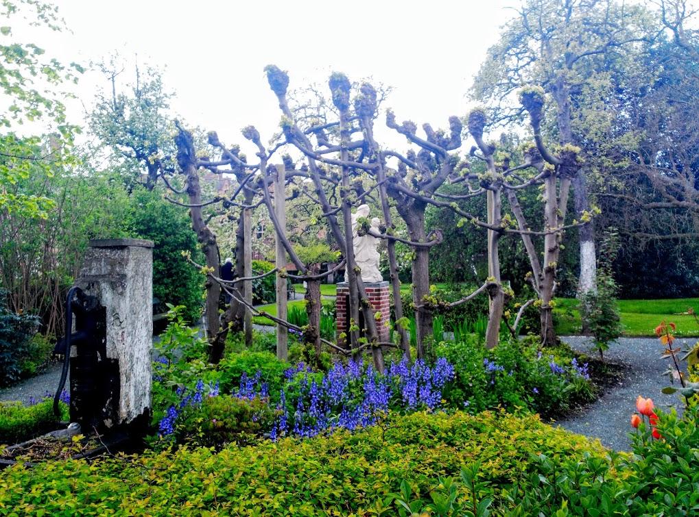 IMG_20160430_164005 Begijnhof, un jardín de paz - IMG 20160430 164005 - Begijnhof, un jardín de paz
