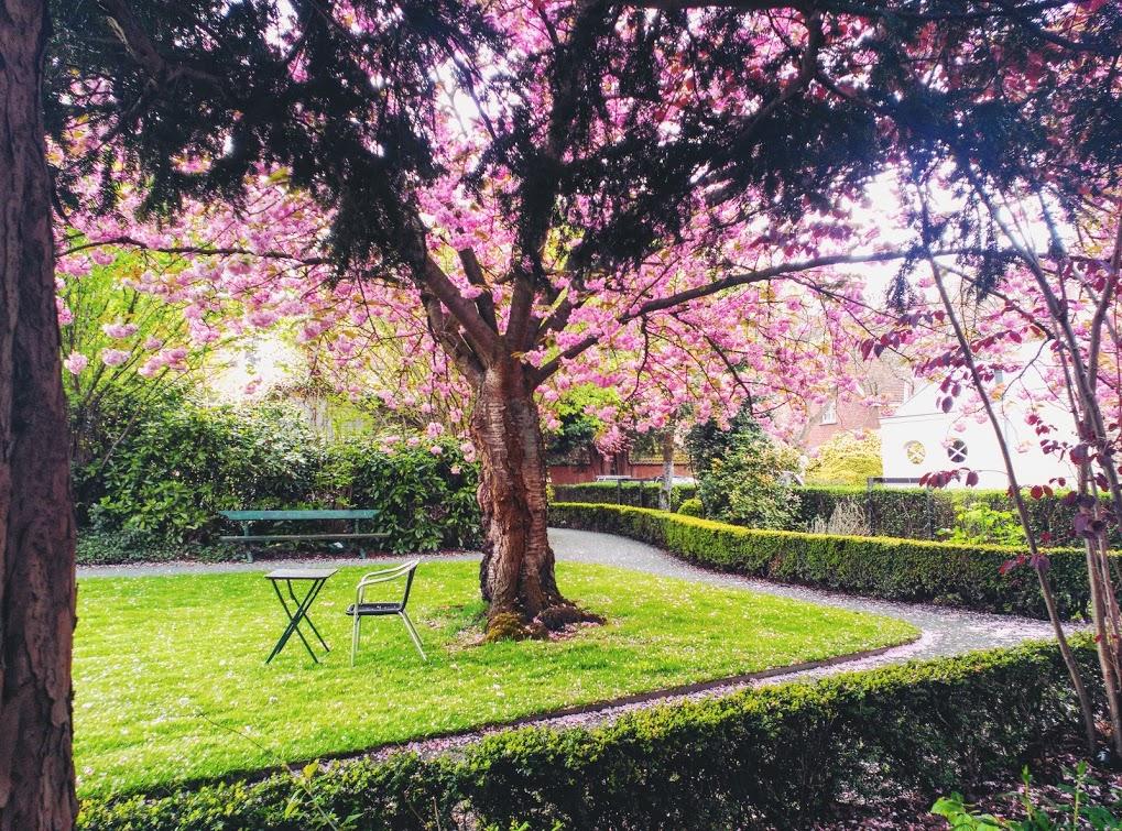 IMG_20160430_164111 Begijnhof, un jardín de paz - IMG 20160430 164111 - Begijnhof, un jardín de paz