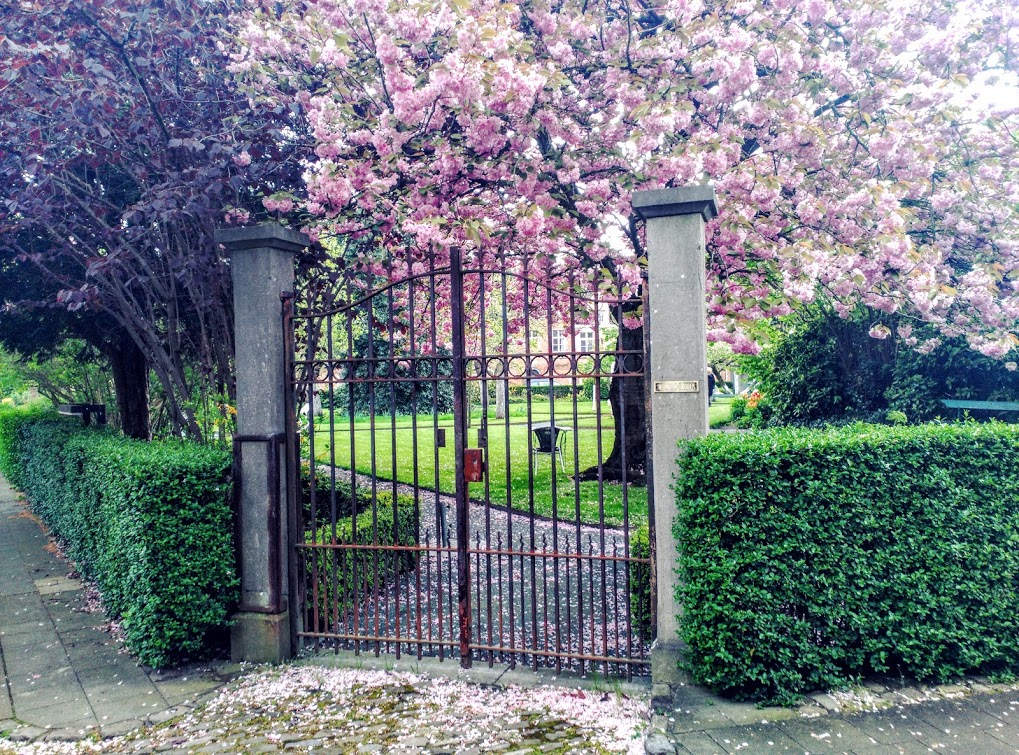 IMG_20160430_164151 Begijnhof, un jardín de paz - IMG 20160430 164151 - Begijnhof, un jardín de paz