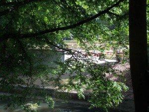 Un festival entre árboles
