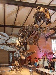 Este sí nos hubiera comido: ¡el T-REX! Museos de Bruselas: Museo Nacional de Ciencias Naturales - DSCN6425 225x300 - Museos de Bruselas: Museo Nacional de Ciencias Naturales