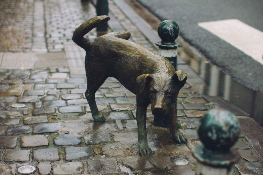 Cmo eliminar el olor a orina de perro de forma natural