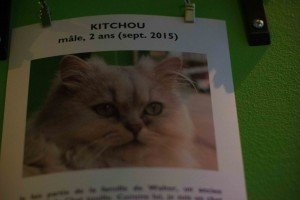 Chat Touille-10