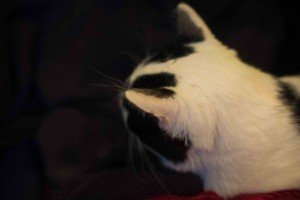Chat Touille-3