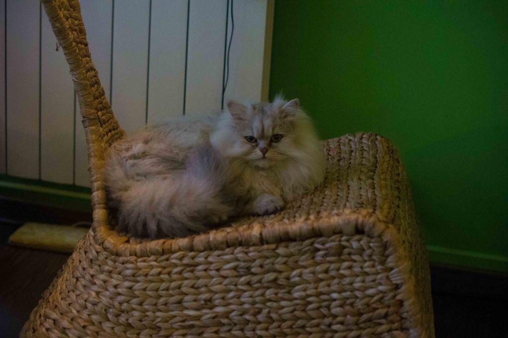 los gatos chatrooms 100% free online dating in los gatos 1,500,000 daily active members.