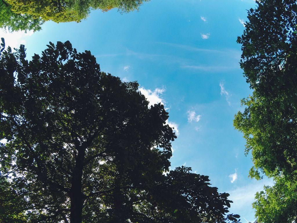 botanique-3 ¡El Jardín Botánico es algo más que un parque! - botanique 3 1024x768 - ¡El Jardín Botánico es algo más que un parque!