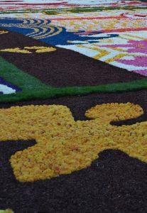 R Las flores cubren la Grand-Place, el tapiz floral bruselense - DSC 0410 207x300 - Las flores cubren la Grand-Place, el tapiz floral bruselense