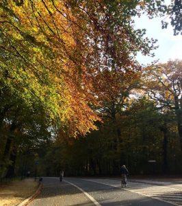 h El pulmón verde del barrio de Ixelles - h 266x300 - El pulmón verde del barrio de Ixelles