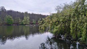 parque nacional de tervuren, una cita obligatoria con la naturaleza - Arbol caido sobre el lago 300x169 - Parque Nacional de Tervuren, una cita obligatoria con la naturaleza