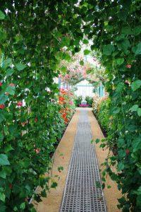 """celebra la llegada de la primavera en """"les serres royales de laeken"""" - Pasillo floral 200x300 - Celebra la llegada de la primavera en """"les Serres Royales de Laeken"""""""