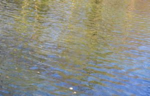 - agua 300x193 - El Parque deJosaphat