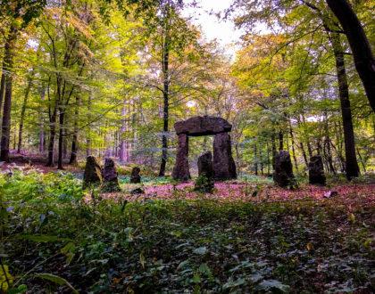 El Bosque de Soignes