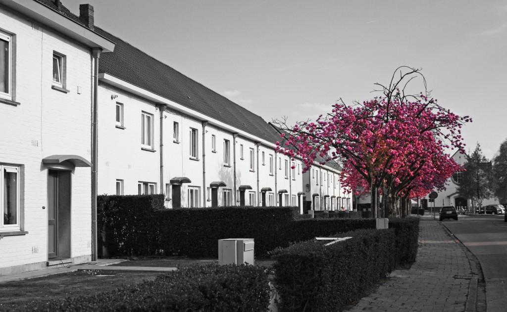 Malem: las casas blancas de Gante