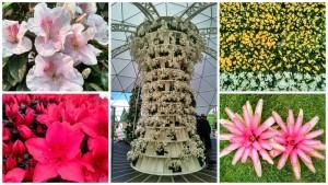 Floralias Gante_opt
