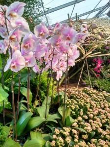 Floralias Gent (8)
