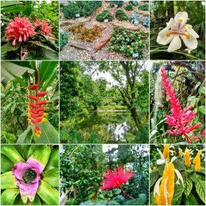 Jardín Botánico (1)
