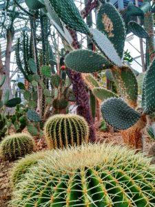 Jardín Botánico (10) El rincón verde de Gante - Jard  n Bot  nico 10 225x300 - El rincón verde de Gante