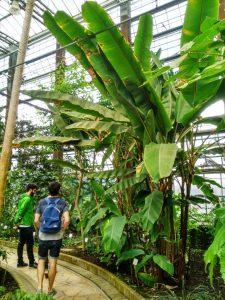 Jardín Botánico (3) El rincón verde de Gante - Jard  n Bot  nico 3 225x300 - El rincón verde de Gante
