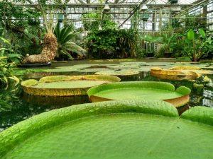 Jardín Botánico (4) El rincón verde de Gante - Jard  n Bot  nico 4 300x225 - El rincón verde de Gante