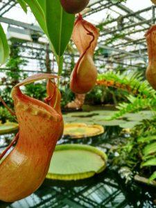 Jardín Botánico (6) El rincón verde de Gante - Jard  n Bot  nico 6 225x300 - El rincón verde de Gante