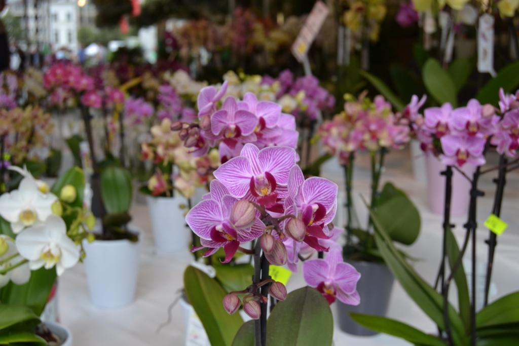R bloemenmarkt, el amor por las flores - DSC 0079 - Bloemenmarkt, el amor por las flores