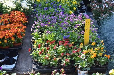 Gante, la ciudad de las flores