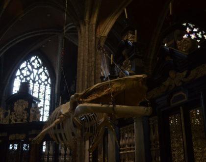 """Conoce a """"Leo"""": un esqueleto de rorcual"""