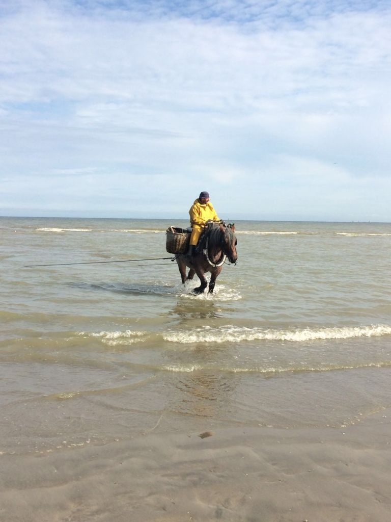 IMG-20160722-WA0006 paardenvissers: pesca tradicional a caballo - IMG 20160722 WA0006 768x1024 - Paardenvissers: pesca tradicional a caballo