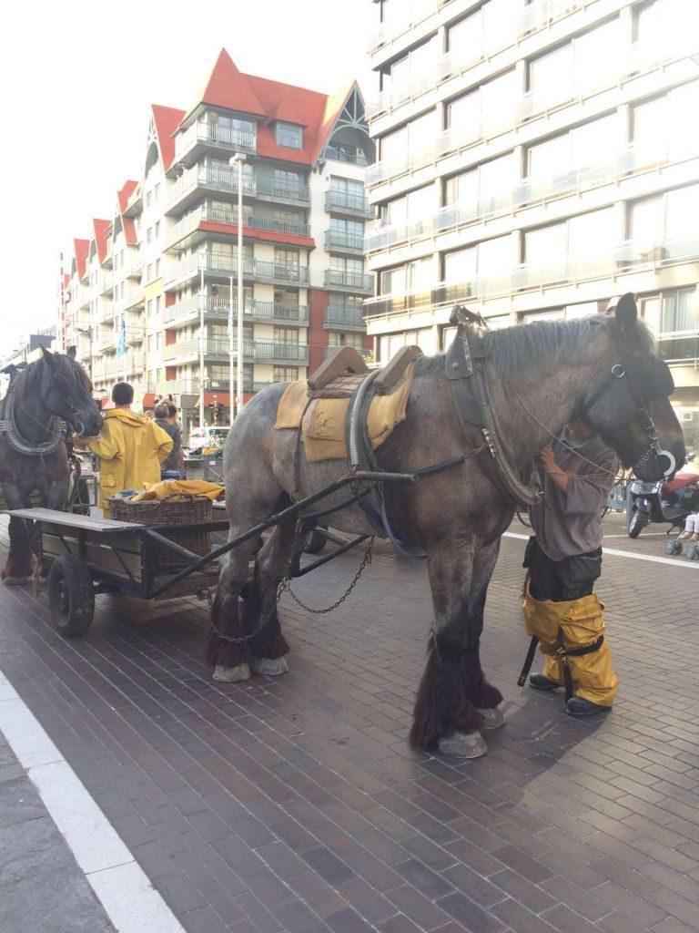 IMG-20160722-WA0011 paardenvissers: pesca tradicional a caballo - IMG 20160722 WA0011 768x1024 - Paardenvissers: pesca tradicional a caballo