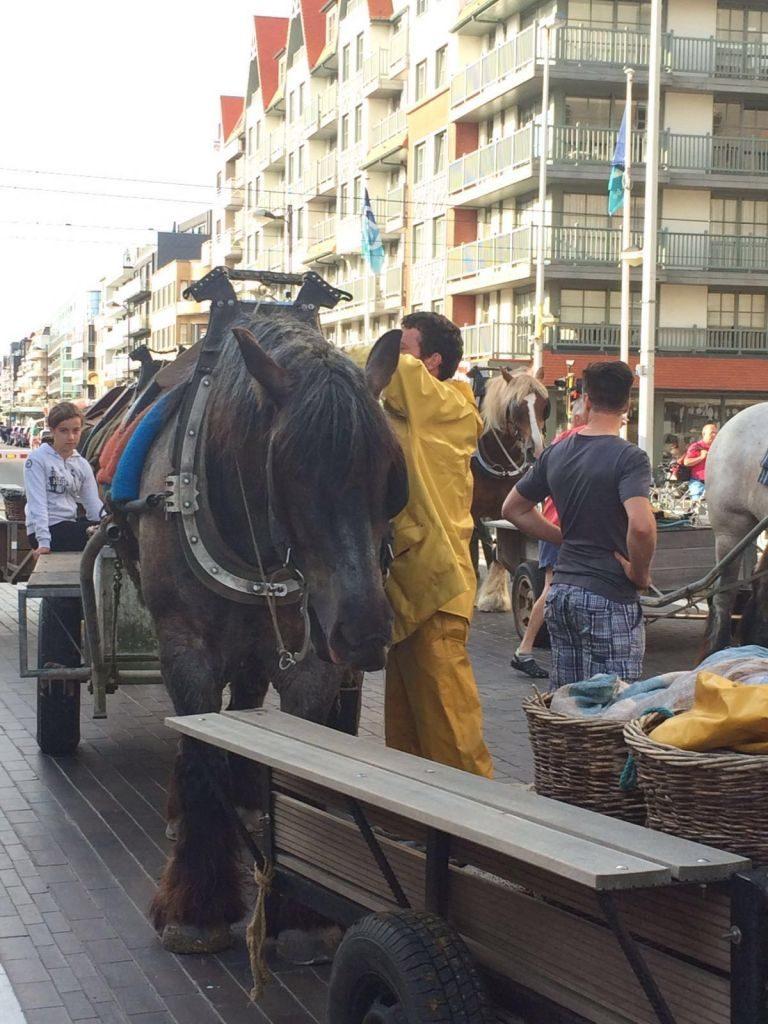 IMG-20160722-WA0015 paardenvissers: pesca tradicional a caballo - IMG 20160722 WA0015 768x1024 - Paardenvissers: pesca tradicional a caballo