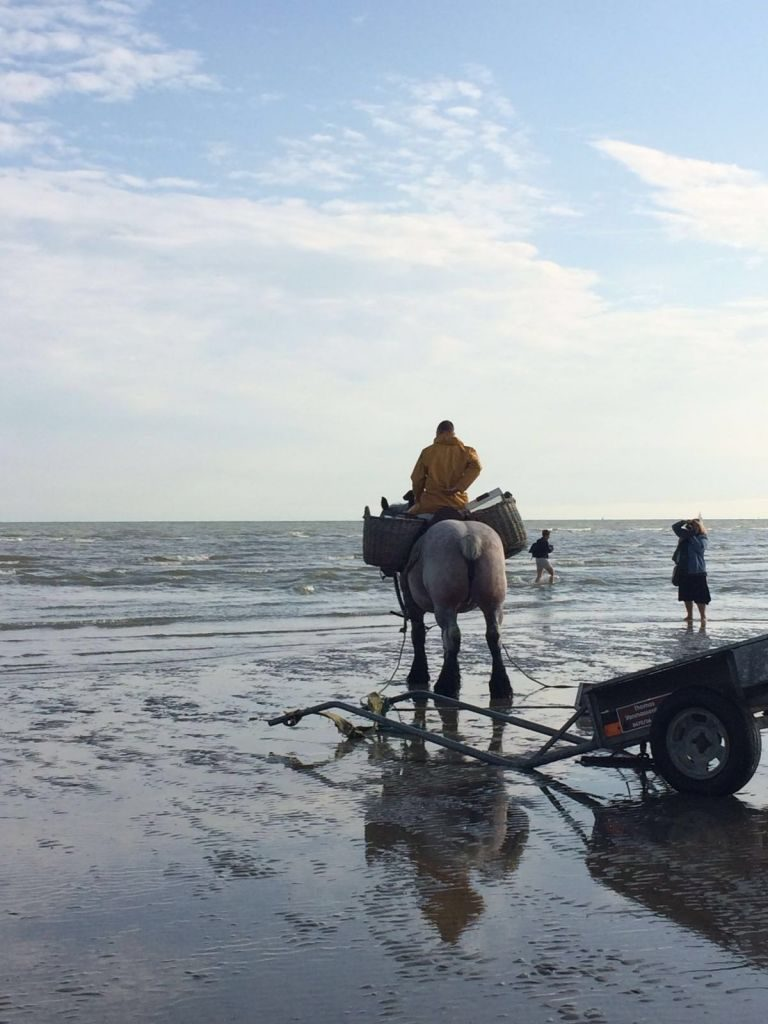 IMG-20160722-WA0024 paardenvissers: pesca tradicional a caballo - IMG 20160722 WA0024 768x1024 - Paardenvissers: pesca tradicional a caballo