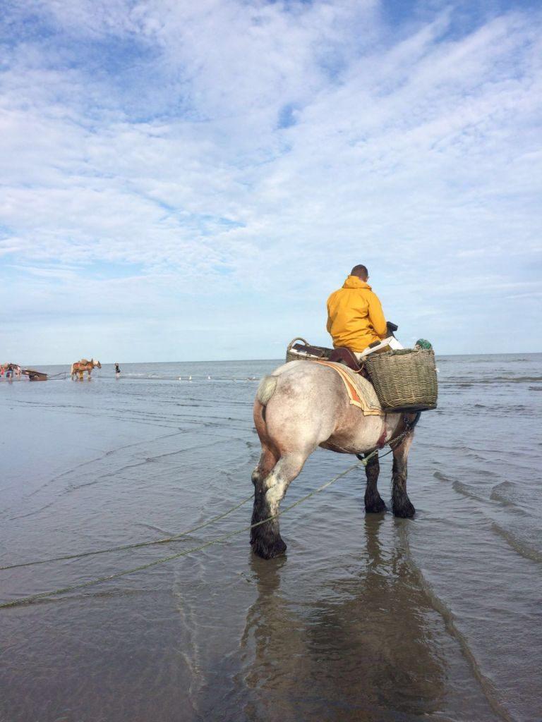 IMG-20160722-WA0026 paardenvissers: pesca tradicional a caballo - IMG 20160722 WA0026 768x1024 - Paardenvissers: pesca tradicional a caballo
