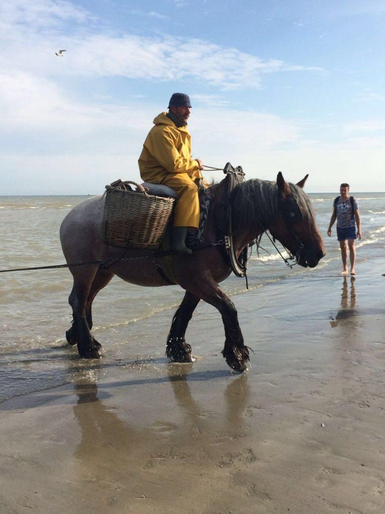 IMG-20160722-WA0033 paardenvissers: pesca tradicional a caballo - IMG 20160722 WA0033 768x1024 - Paardenvissers: pesca tradicional a caballo