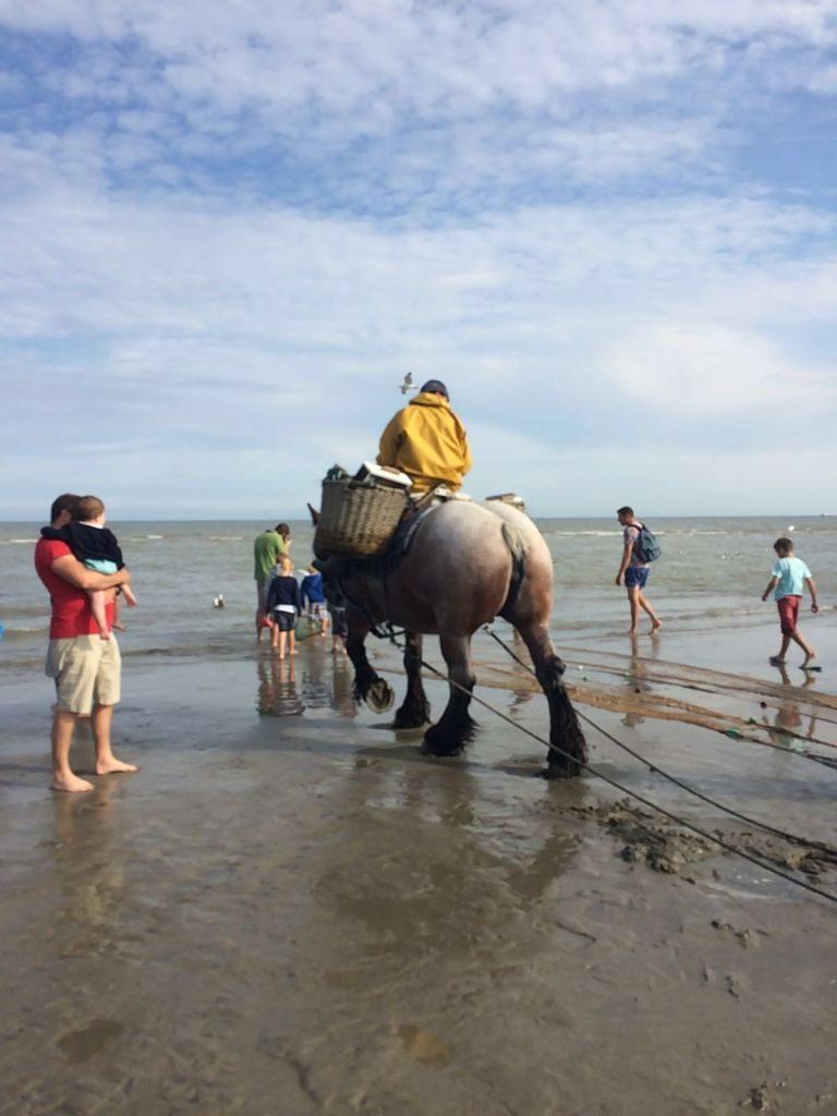 IMG-20160722-WA0034 paardenvissers: pesca tradicional a caballo - IMG 20160722 WA0034 768x1024 - Paardenvissers: pesca tradicional a caballo