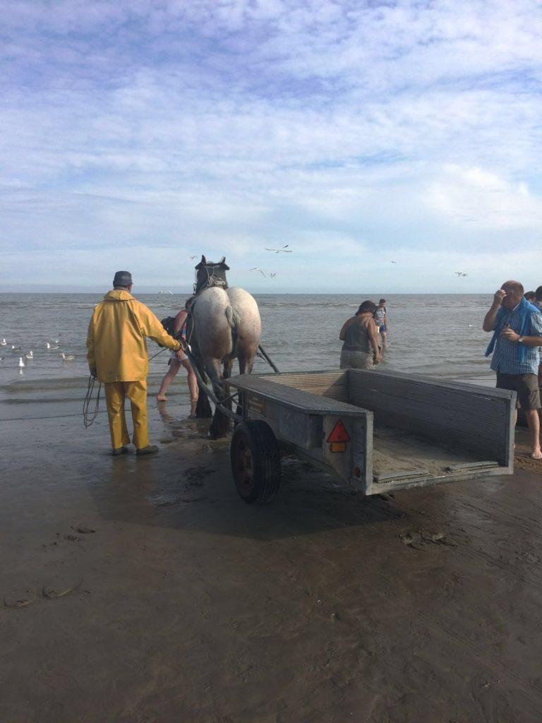 IMG-20160722-WA0037 paardenvissers: pesca tradicional a caballo - IMG 20160722 WA0037 768x1024 - Paardenvissers: pesca tradicional a caballo
