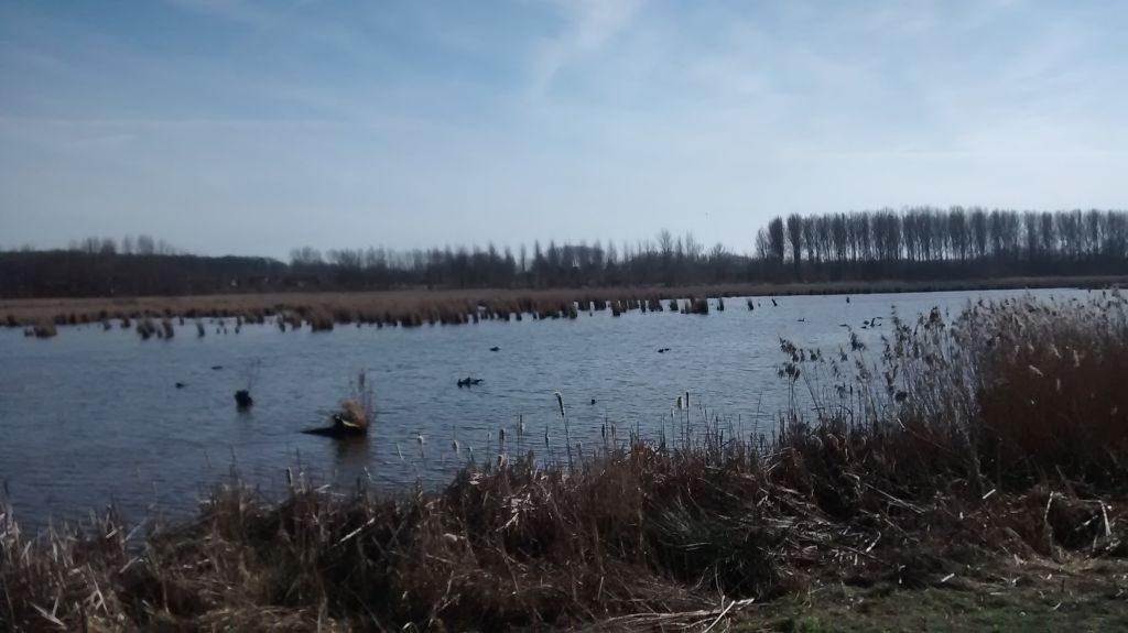 IMG_20150308_143018621 Zoutleeuw y su reserva natural - IMG 20150308 143018621 1024x575 - Zoutleeuw y su reserva natural
