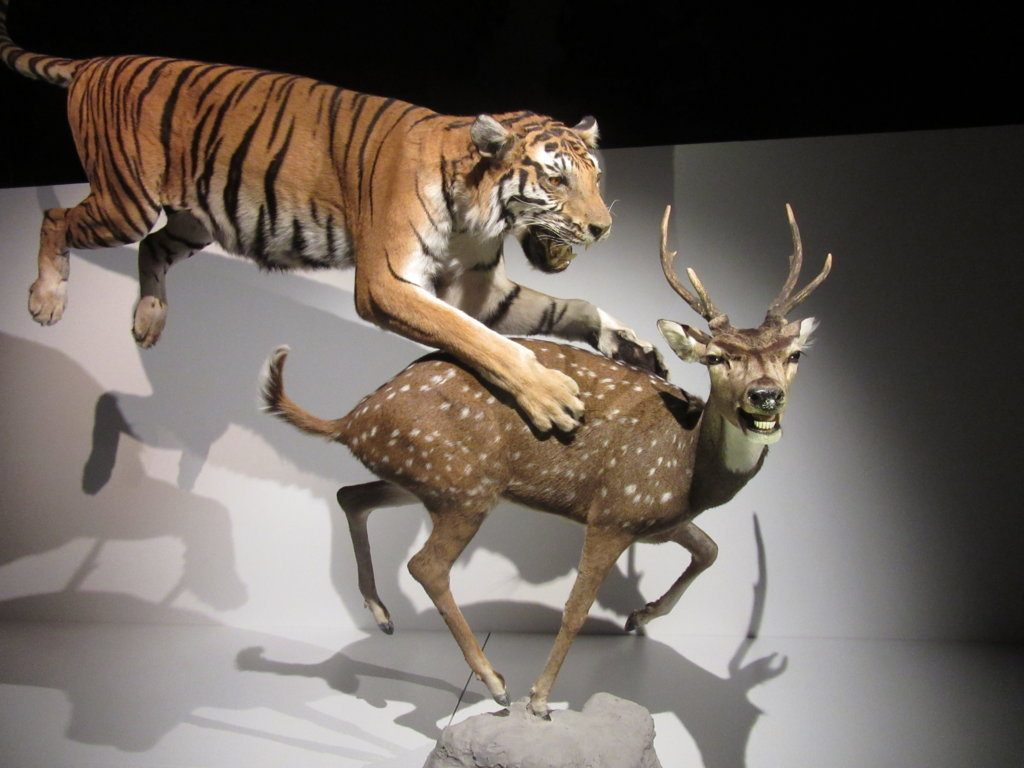 IMG_9391 (FILEminimizer) ¡WOW!: Wonders Of Wildlife - IMG 9391 FILEminimizer 1024x768 - ¡WOW!: Wonders Of Wildlife
