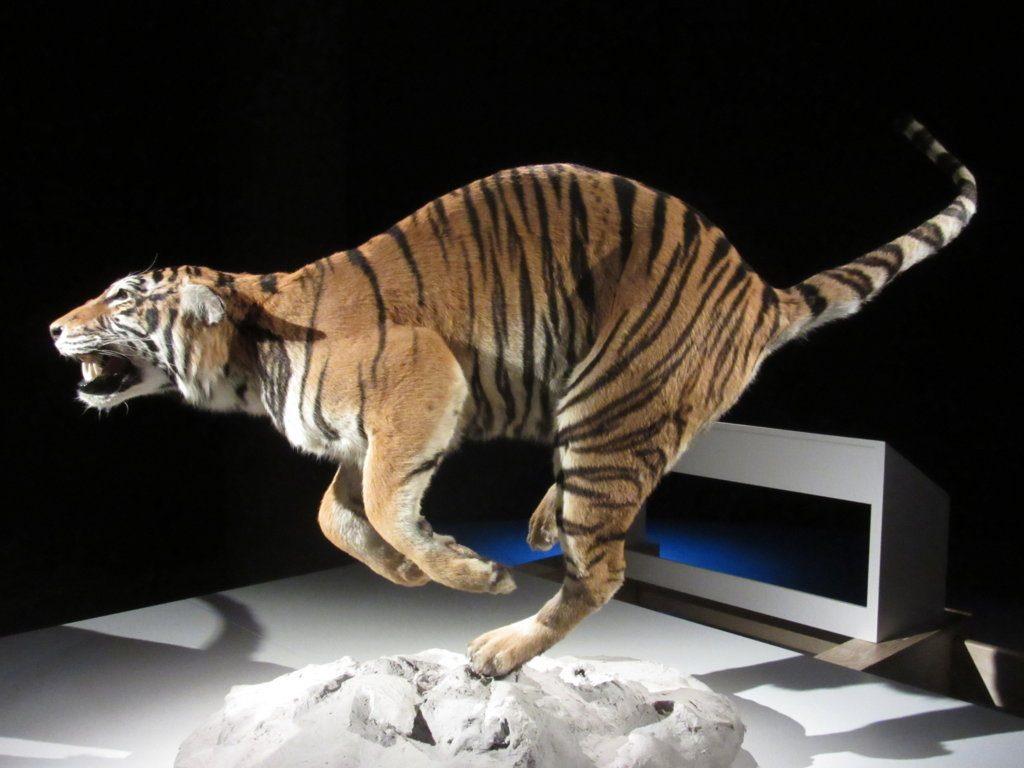 IMG_9394 (FILEminimizer) ¡WOW!: Wonders Of Wildlife - IMG 9394 FILEminimizer 1024x768 - ¡WOW!: Wonders Of Wildlife