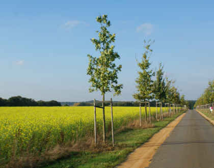 Lovaina sobre ruedas (I): Ruta Leuven - Hageland