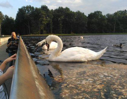 Parque Bokrijk, naturaleza en esencia